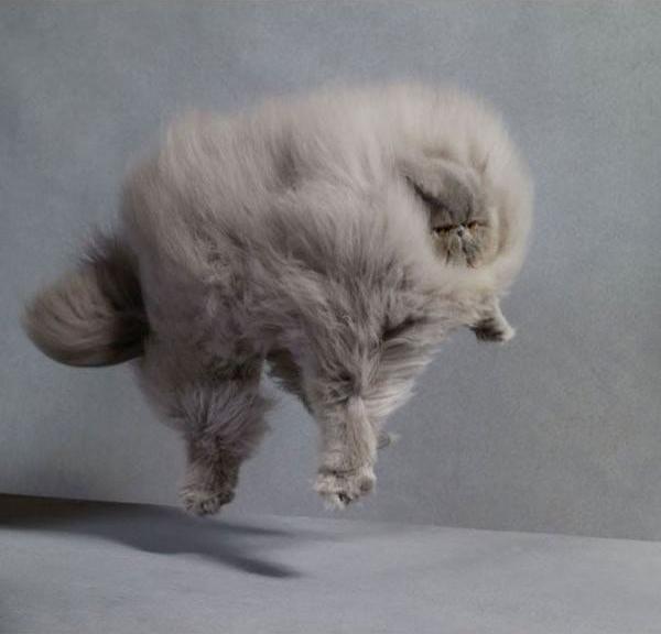 Красивые картинки Живность Котэ Фото Кот-облако пушистота