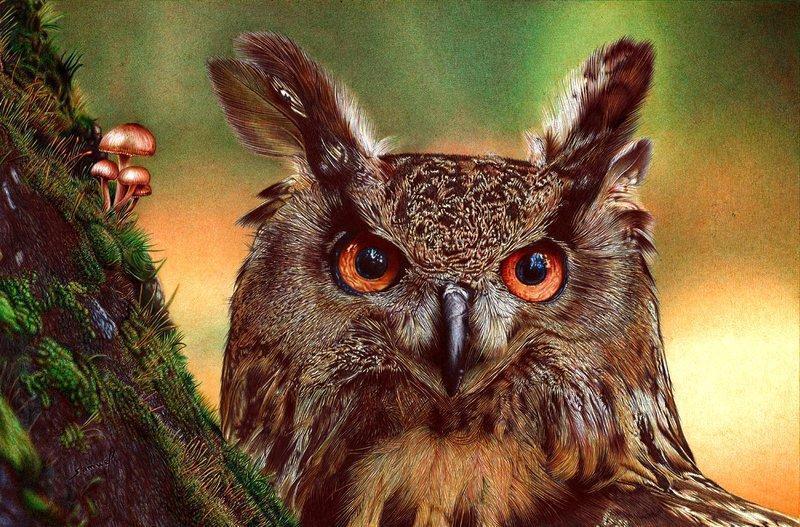 Красивые картинки Живность сова Фото