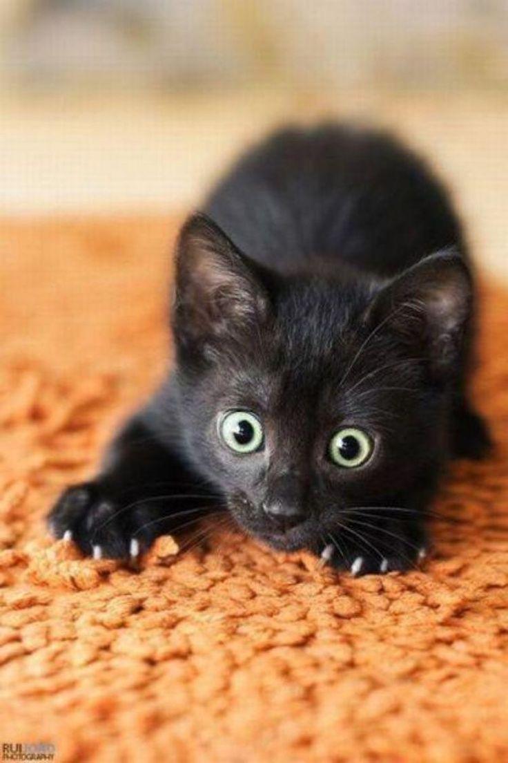 Красивые картинки Живность Котэ Фото котёнок