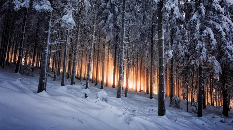 Красивые картинки Обои Фото Природа лес