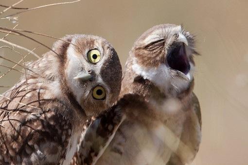 Красивые картинки Живность Совушки Фото Милота