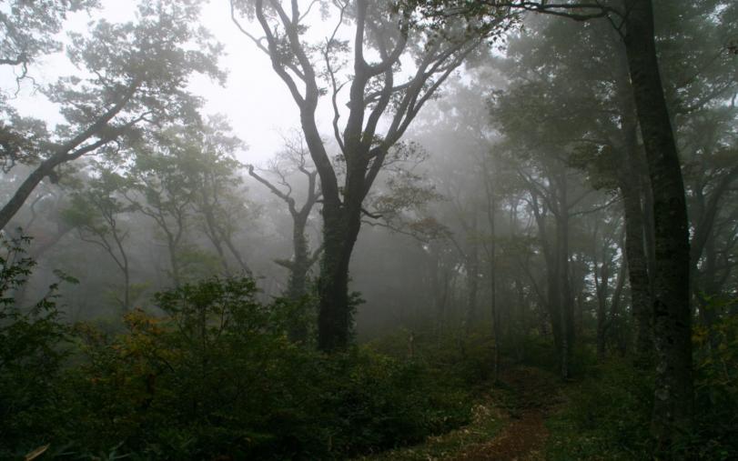 Красивые картинки Фото Природа лес магия туман