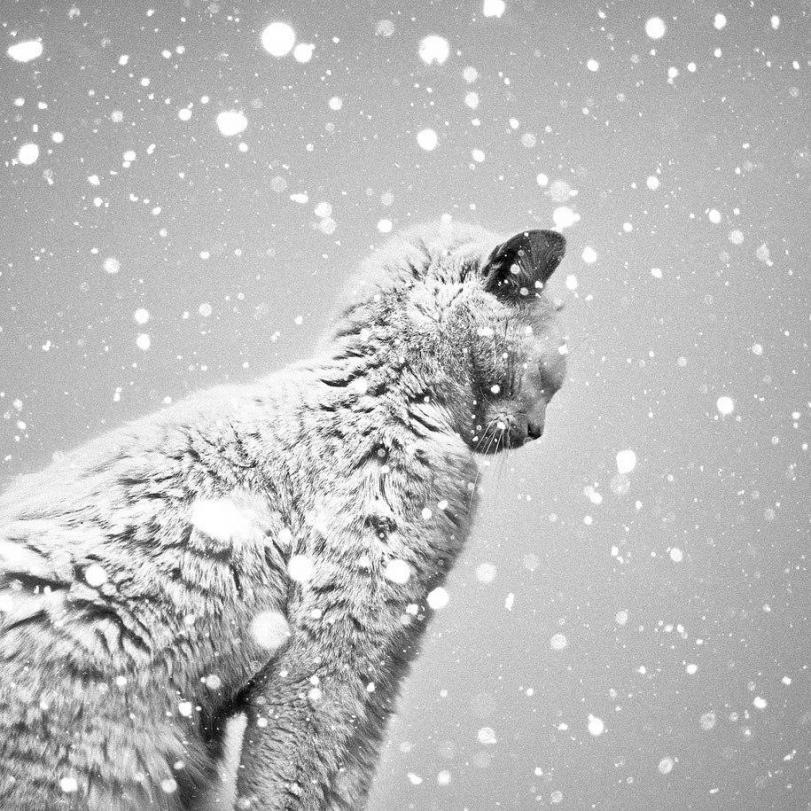 Живность кот Милота Зима снег