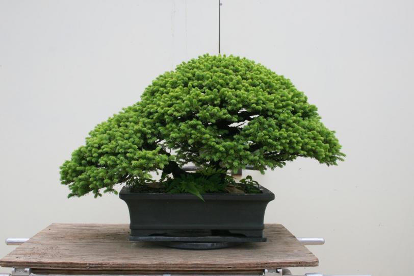Красивые картинки Фото Природа бонсай