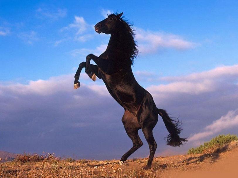 Красивые картинки Живность Фото Лошадки