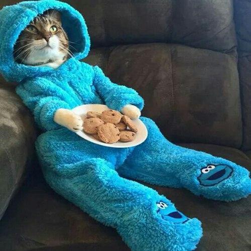 Живность Котэ кот Милота