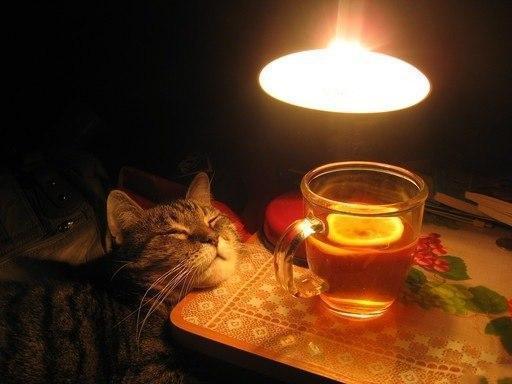 Живность кот Милота уют