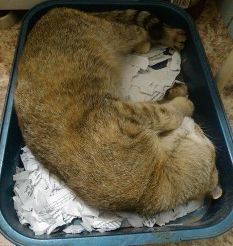 Живность Котэ кот Милота Коты и коробки