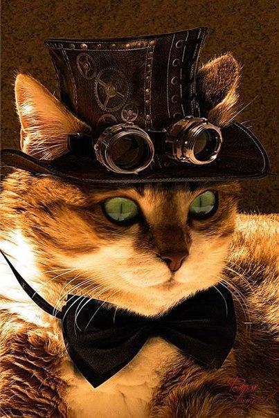 Красивые картинки Живность Котэ кот Милота Оружие
