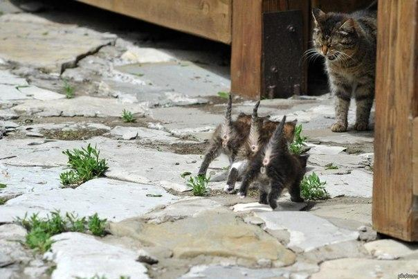Красивые картинки Живность Котэ кот Милота котята