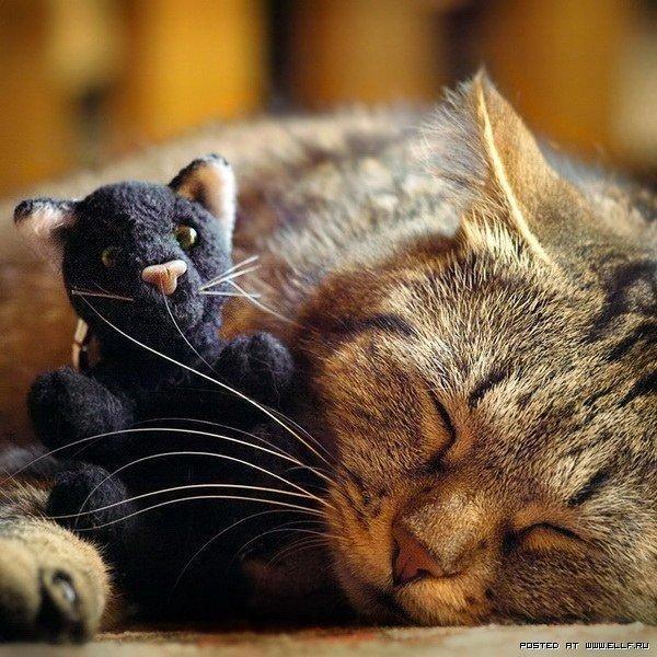 Красивые картинки Живность Котэ кот Милота сладкие сны