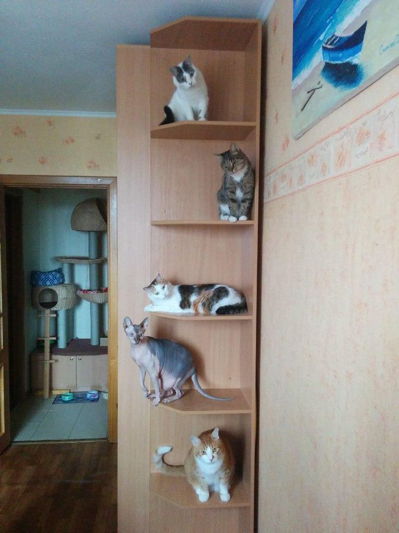 Красивые картинки Живность Котэ кот Милота