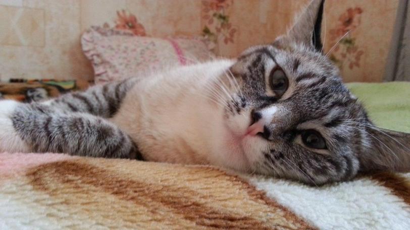 Живность кот Милота