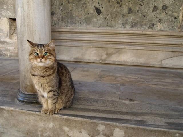 Живность Котэ кот Милота Кот скептический косоглазый кот