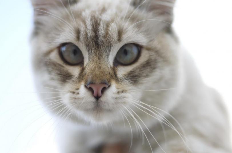 Красивые картинки Живность Котэ кот Милота косоглазый кот