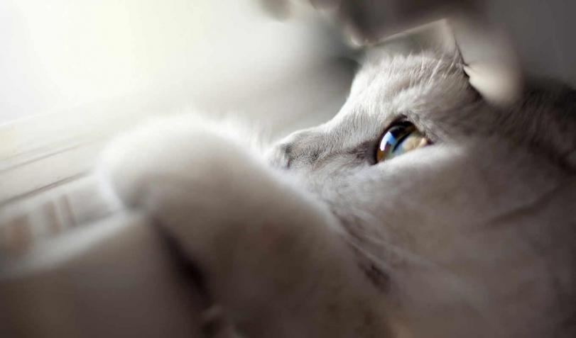 Красивые картинки Котэ кот Милота глаза