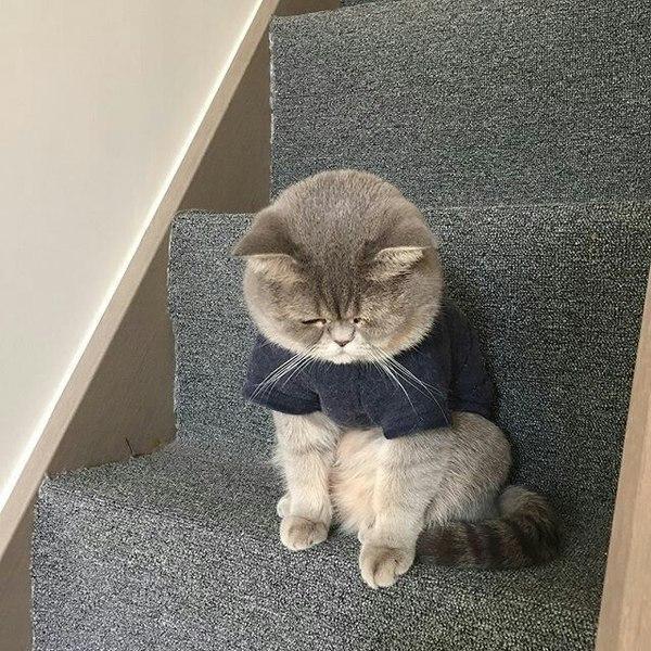 Красивые картинки Живность Котэ кот Милота грусть