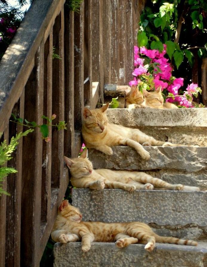 Красивые картинки Живность Котэ кот Милота Рыжий кот больше котов богу котов