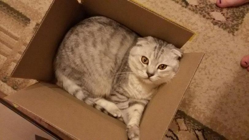Красивые картинки Живность Котэ кот Милота Коты и коробки