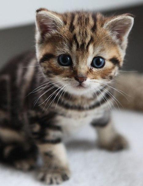 Красивые картинки Живность Котэ кот Милота котёнок