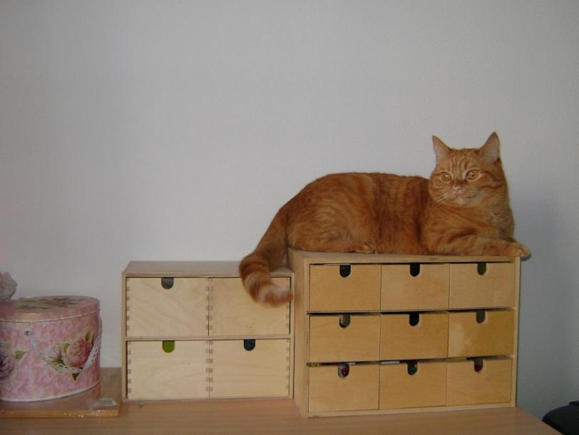 Красивые картинки Живность Котэ кот Милота Коты и коробки Рыжий кот