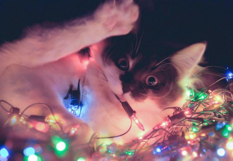 Красивые картинки Живность Котэ кот Милота коты и гирлянды