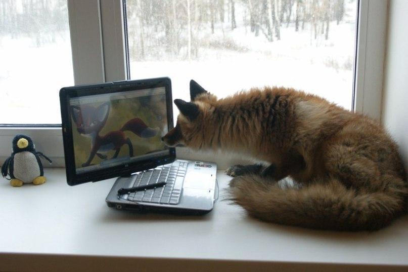 Красивые картинки Живность Милота Лиса лисица рыжая лиса