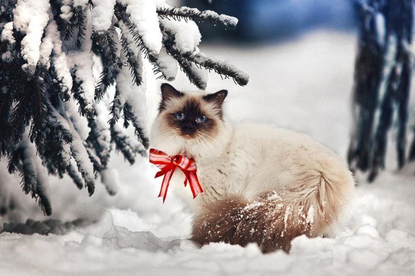 Фото Красивые картинки Живность Котэ Зима снег