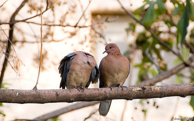 птички Живность Красивые картинки