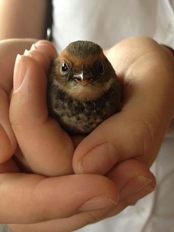 мимими живность Красивые картинки птичка воробей