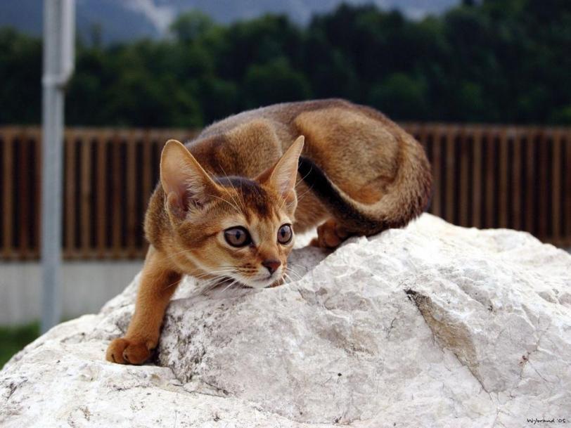 кошки милота больше котов богу котов Красивые картинки живность