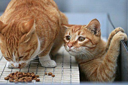 кот наглая рыжая морда милота Красивые картинки