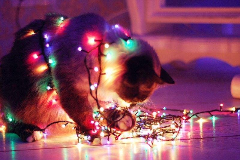коты и гирлянды кот милота Красивые картинки Живность
