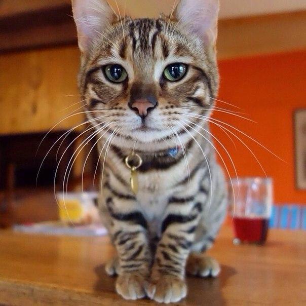 кот живность красивые глаза Красивые картинки усы