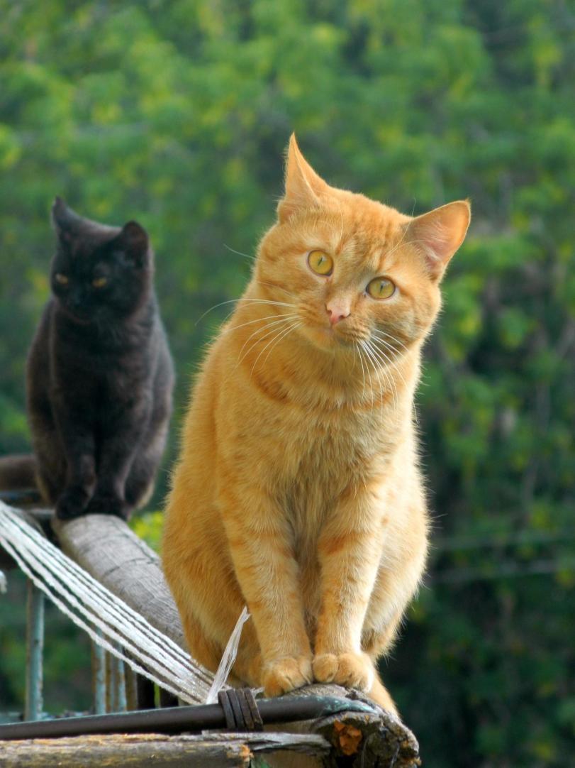 Фото Красивые картинки Живность Котэ Рыжий кот