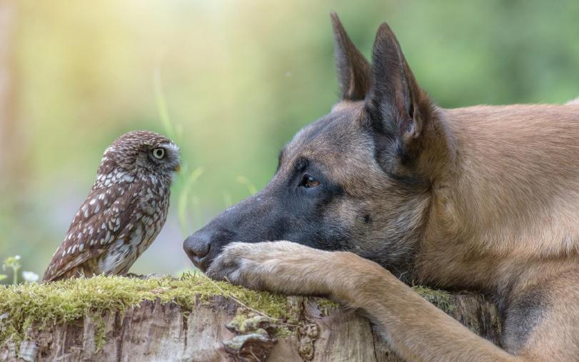 Фото Красивые картинки Живность собака Совушки Милота