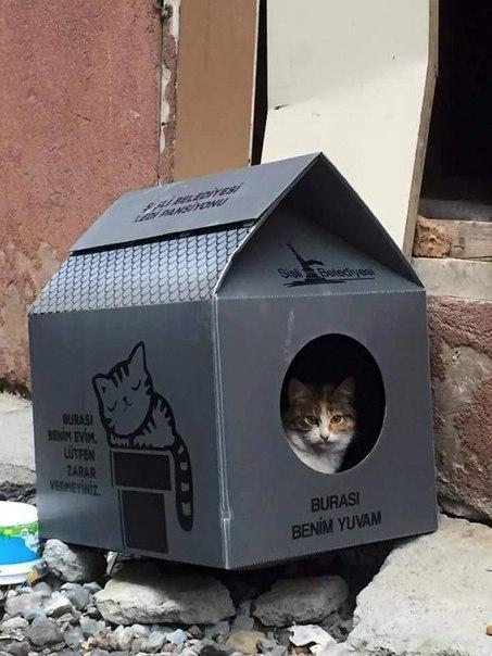 кот котэ милота Красивые картинки кошкин дом
