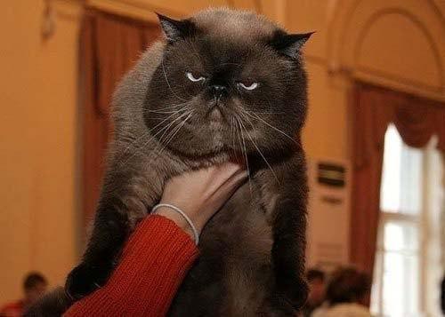кот котэ Милота Красивые картинки Живность