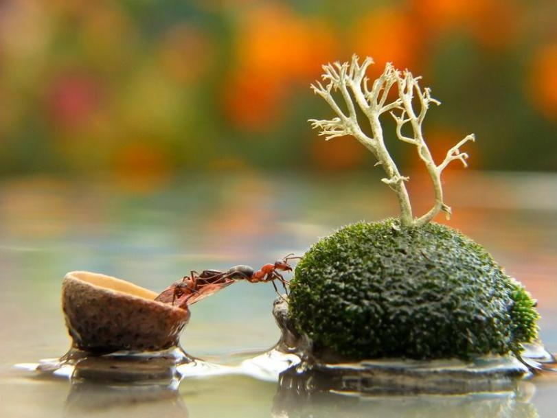 Фото Природа Живность Красивые картинки муравей