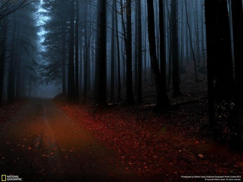 Фото Красивые картинки Природа лес National Geographic кликабельно