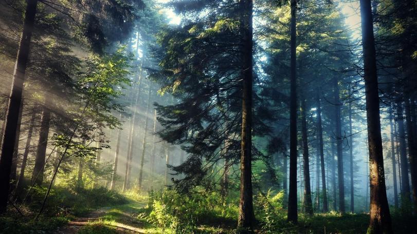 Фото Природа Красивые картинки лес кликабельно песочница