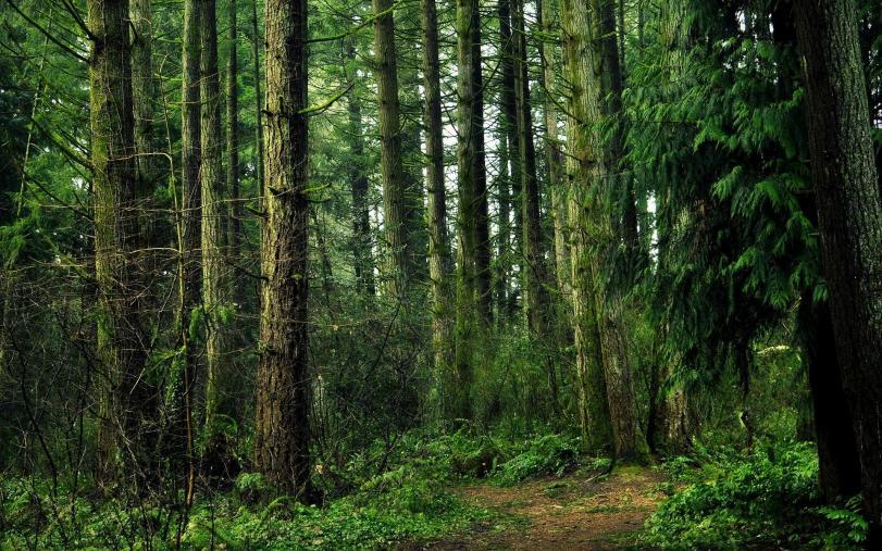 Фото Красивые картинки лес Природа