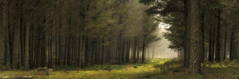 Фото Природа лес песочница