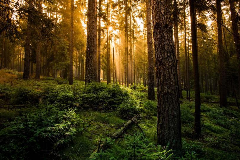 Фото Красивые картинки Природа лес кликабельно песочница