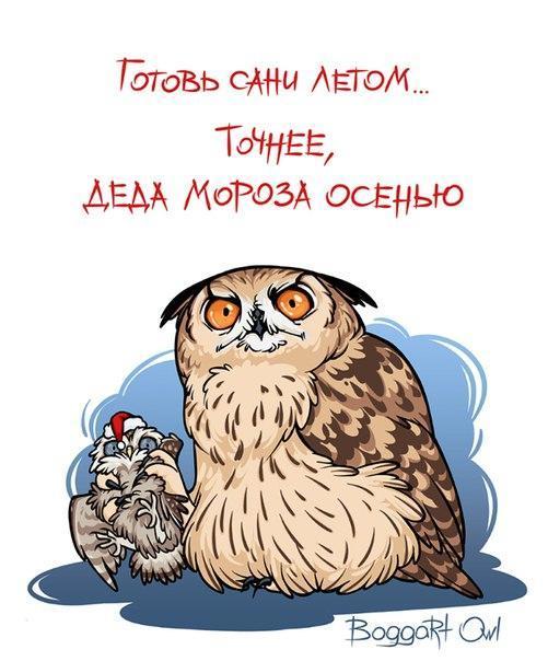рисунок Прикольные картинки Boggart Owl