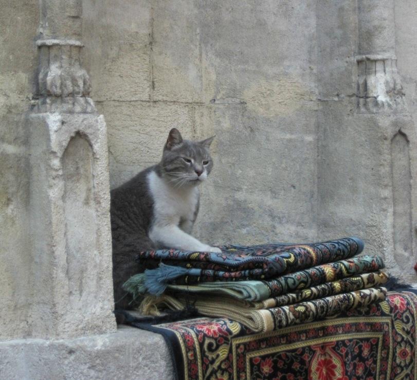 Живность Котэ ковёр Прикольные картинки The Elder Scrolls